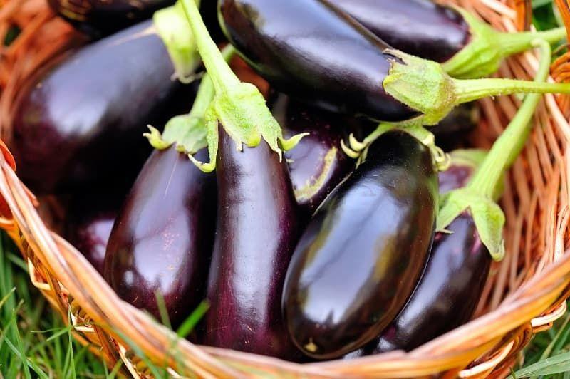 fresh-eggplant-in-basket-on-grass-pl5utv3.jpg
