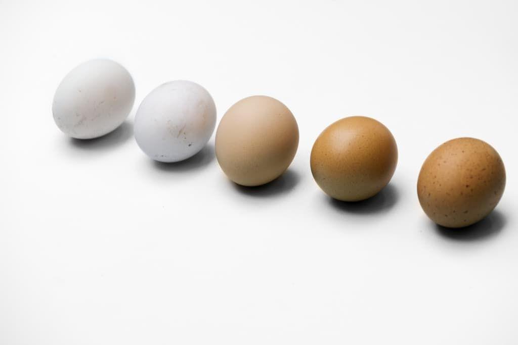 closeup-of-fresh-organic-various-eggs-pldnpgw.jpg