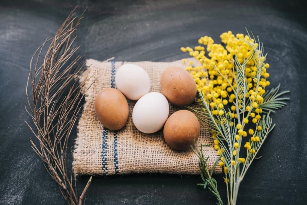 Откуда берутся куриные яйца