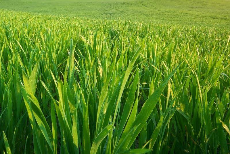 green-grass-texture-aunn5ne.jpg