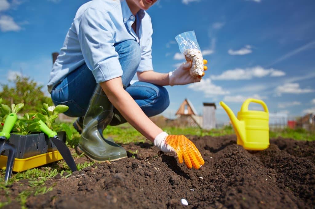 planting-pyyu3np.jpg