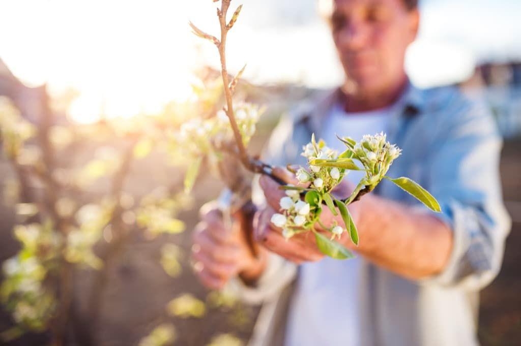 Куриный помет, как удобрение. Способы использования в качестве живой подкормки, в виде сухих гранул и компоста