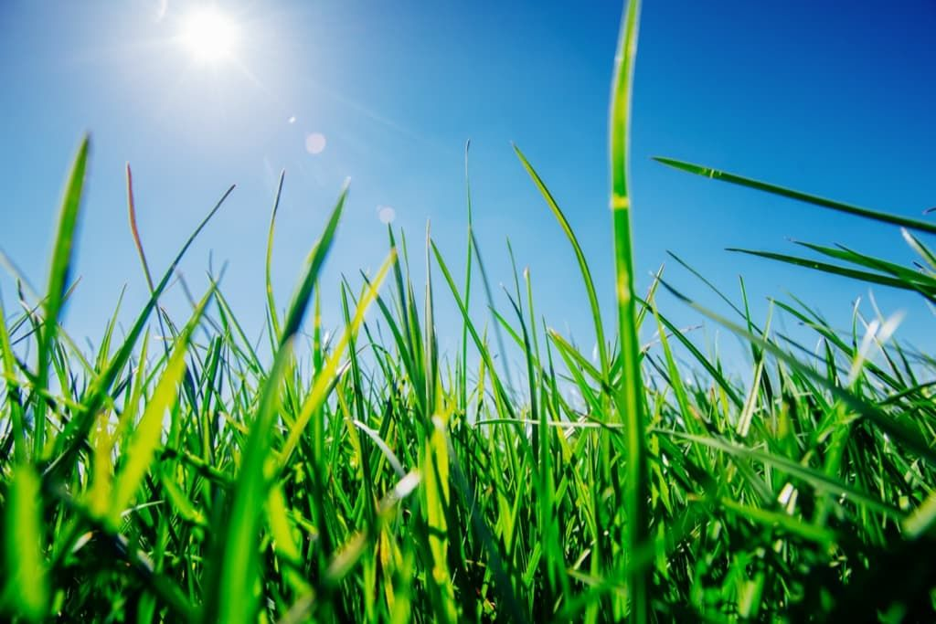 close-up-of-fresh-thick-grass-scd3lxh.jpg