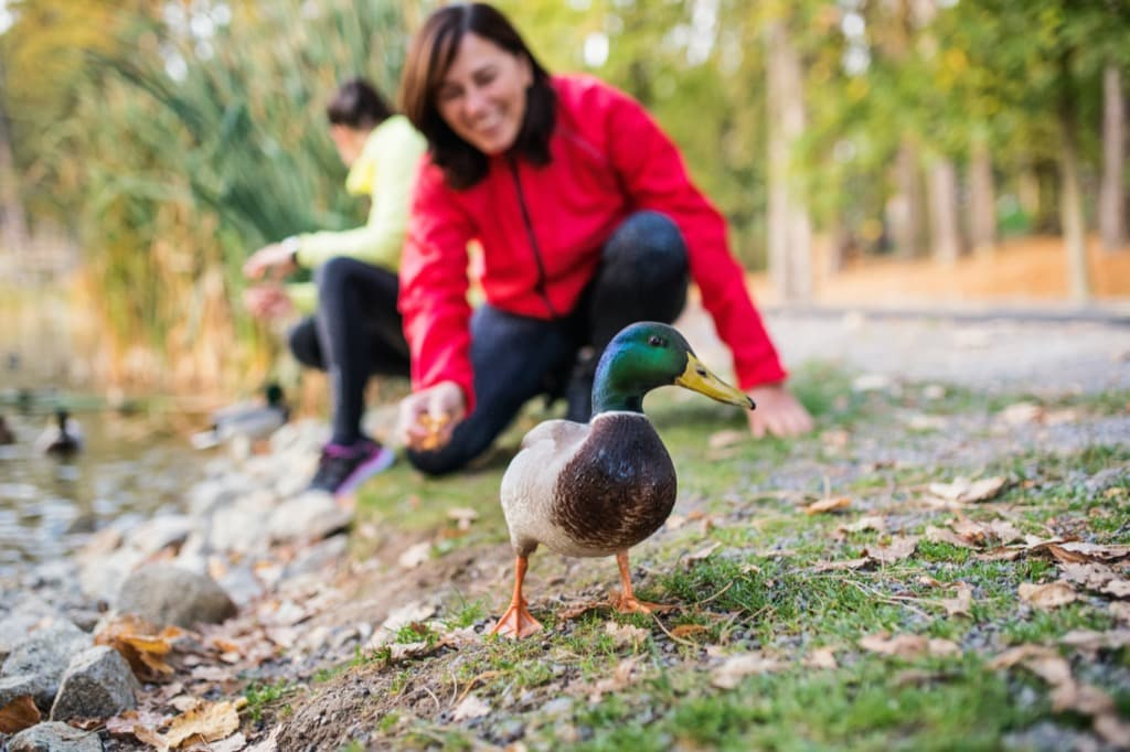 female-runners-by-the-lake-outdoors-in-park-in-nat-hy2q36c.jpg